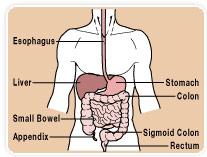 diagram of price elasticity of demand diagram of esophageal cancer esophageal dilatation | ecaa: esophageal cancer awareness ...